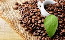 Xuất khẩu cà phê mang về 1,3 tỷ USD trong 4 tháng đầu năm
