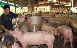 """Giá lợn vọt tăng, người nuôi tiếc vì """"lợn không, chuồng trống"""""""