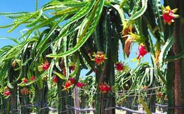 HAGL đặt mục tiêu 200 tỷ LNTT năm 2018, thu về gần 4.000 tỷ từ trái cây