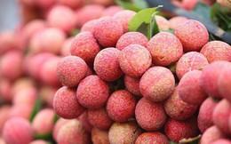 Mỗi ngày tiêu thụ trên 4.000 tấn vải thiều Bắc Giang