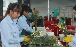 Trong 100 đồng tiền thuế, doanh nghiệp FDI chỉ góp 25 đồng