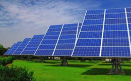 Tập đoàn Cá Tầm Việt Nam đầu tư dự án điện mặt trời 1.200 tỷ đồng tại Ninh Thuận