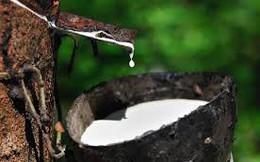 Giá cao su giảm xuống mức thấp nhất 21 tháng