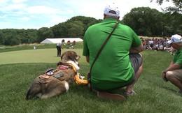 Chú chó nghiệp vụ đầu tiên tham dự giải golf với tư cách khách mời danh dự