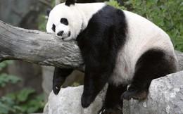 Chứng khoán Trung Quốc rơi vào thị trường gấu, rủi ro tăng trưởng gia tăng