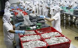 Xuất khẩu mực và bạch tuộc có thể giảm trong quý II