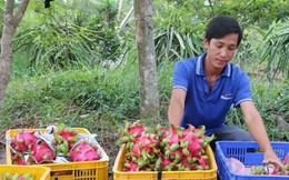 Không có hàng nông sản ùn ứ tại cửa khẩu quốc tế Hữu Nghị