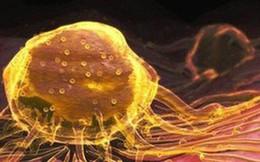 Người Việt đổ xô mua nano vàng chữa ung thư: Chết vì ngộ độc trước khi chết vì bệnh