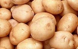 Phát triển sản xuất khoai tây theo xu hướng tiêu dùng
