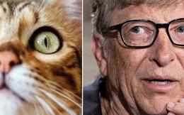"""Mèo và các doanh nhân thành đạt: Có mối liên hệ rất quái đản giữa """"họ"""" mà bạn sẽ không bao giờ nghĩ đến"""