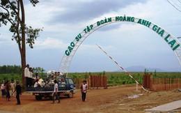 HAGL Agrico (HNG) : Sự cố ở Attapeu ảnh hưởng không nhiều tới công ty