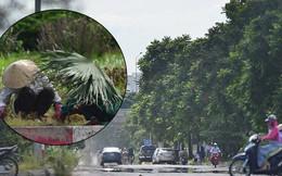 Hà Nội: Mặt đường bốc hơi dưới cái nắng nóng 40 độ, công nhân công ty cây xanh phải che lá chống nắng
