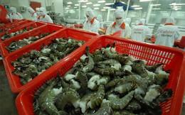 Từ 28/9, siết điều kiện nhập khẩu tôm vào Úc