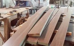 Đa dạng nguyên liệu gỗ cho xuất khẩu