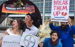 """Tai tiếng Monsanto: Cuộc """"hôn nhân"""" tai hại"""