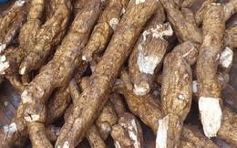 Xuất khẩu gặp khó, giá nguyên liệu và sắn lát tại thị trường trong nước giảm