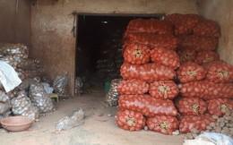 Phát hiện cơ sở đánh tráo khoai tây Trung Quốc thành khoai tây Đà Lạt