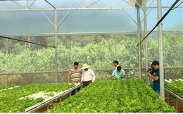 """Hút đầu tư vào nông nghiệp: """"Át chủ bài"""" là cơ chế"""