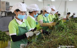 Người nộp thuế thu nhập cao nhất Nghệ An: 2 năm, hơn 1,5 tỷ đồng