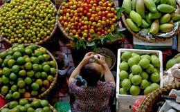 """Ngành rau củ quả Việt Nam nhìn từ """"đặt hàng"""" của Thủ tướng"""