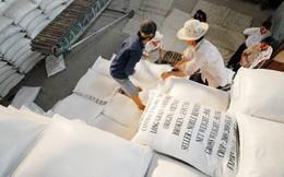 Xuất khẩu gạo đón nhiều tin vui từ thị trường Trung Quốc, Philippines
