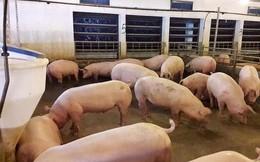 Giá lợn tăng nóng, Bộ Nông nghiệp lo ngại vượt cung như năm 2017