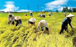 Tăng mức cho vay nông nghiệp khi không có tài sản bảo đảm