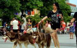 Đề xuất cấm người dân mang chó, mèo vào phố đi bộ Hồ Gươm: Người đồng tình, người cho rằng chưa hợp lý