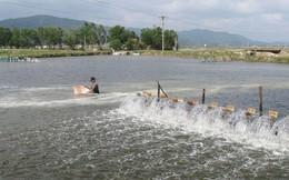 Sử dụng chất cấm trong nuôi trồng thủy sản, Bộ Nông nghiệp và Phát triển nông thôn đề xuất phạt nặng 100 - 200 triệu đồng