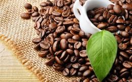 Xuất khẩu cà phê tiếp tục giảm