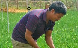 Thu hàng trăm triệu đồng mỗi năm từ mô hình rau an toàn