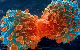 Ăn nhiều mỡ dễ bị ung thư