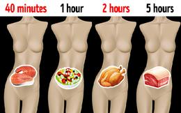 Mất bao lâu thức ăn được tiêu hóa hết: Điều quan trọng ai cũng cần biết để cân bằng chế độ ăn, không khiến dạ dày bị quá tải