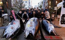 Cá ngừ vây xanh giá gần 324.000 USD