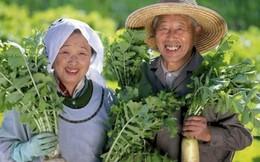 """Có """"các vùng xanh"""" trên thế giới mà người ta thọ tới 100 tuổi, các chuyên gia nói rằng hai điều này là bí mật để họ sống lâu hơn"""