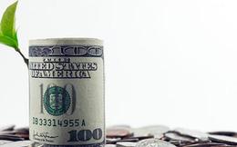 VNG, PGC, TAG, VCW, MVC, AFC: Thông tin giao dịch lượng lớn cổ phiếu