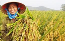 Giống cây trồng Trung Ương (NSC): Lãi 233 tỷ đồng năm 2017; EPS đạt trên 15.200 đồng/cổ phiếu