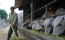 'Choáng' với con số gần nửa tỷ USD nhập thịt trâu, bò!