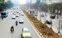 Tranh cãi trồng phong lá đỏ, Công ty cây xanh Hà Nội nói gì?