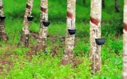 Cao su Bà Rịa (BRR): Giá vốn giảm sâu, thu nhập lớn từ thanh lý cây cao su và cây gãy đổ, LNST năm 2017 vượt 77% kế hoạch