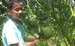 Cận Tết, giá trái cây đặc sản ở miền Tây cao ngất ngưởng