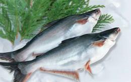 Giá cá tra, tôm có xu hướng tăng vào cuối năm