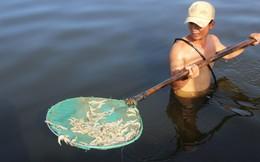 900.000 con tôm chết bất thường, dân nghi bị đầu độc