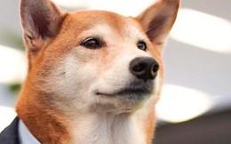 """Chó thời trang Bodhi cực """"ngầu"""" với mức lương 15.000 USD/tháng"""