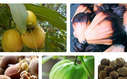 """Nhiều loại quả """"bình dân"""" ở VN, tỷ phú thế giới muốn ăn cũng khó kiếm"""