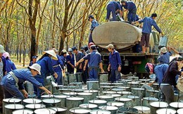Xuất khẩu cao su thứ 3 thế giới, Việt Nam vẫn phải nhập hàng tỉ USD để sản xuất