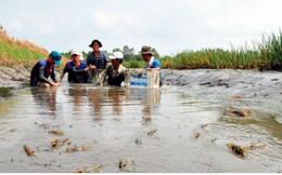 Nuôi tôm càng xanh toàn đực lợi nhuận cao gấp 5 lần trồng lúa