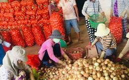 Nông dân tỉnh Lâm Đồng kỳ vọng vào mùa Tết