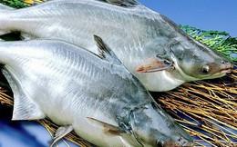 Năm 2019 rủi ro nào đang chờ doanh nghiệp xuất khẩu cá tra?