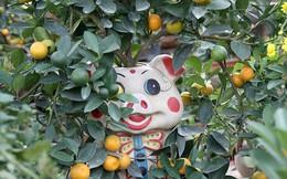 Lợn đất 'cõng' quất bonsai giá bạc triệu chơi Tết ở Hà Nội
